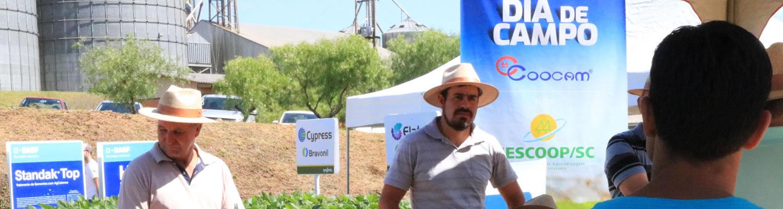 Mais de 300 produtores no Dia de Campo da Coocam em Curitibanos