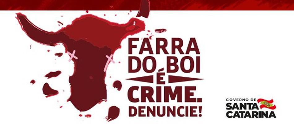 Farra do boi é considerada  crime em Santa Catarina
