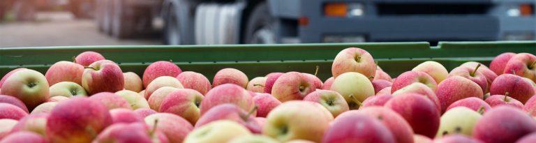 Agronegócio deve focar no transporte de alimentos