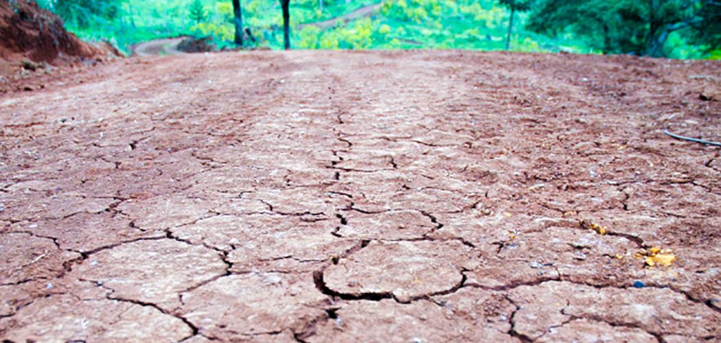 Estiagem prejudica pecuária e compromete abastecimento de propriedades rurais em Santa Catarina