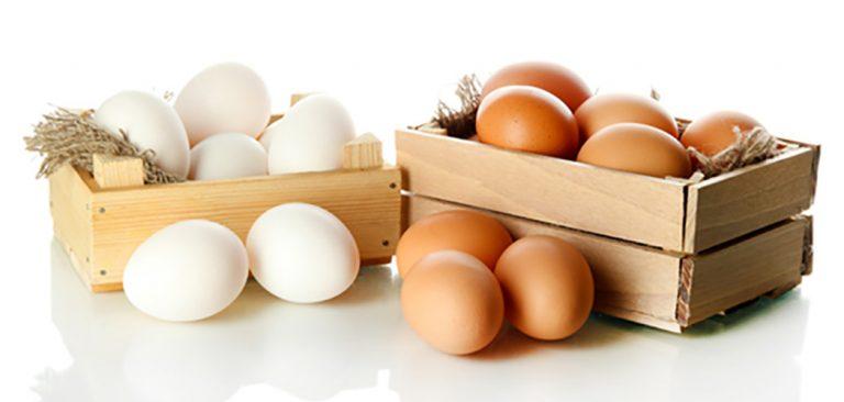 Ovo: o alimento que aumenta a imunidade!