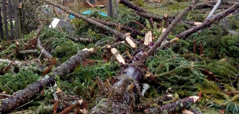 Produtores rurais catarinenses podem usar madeira de árvores derrubadas pelo ciclone