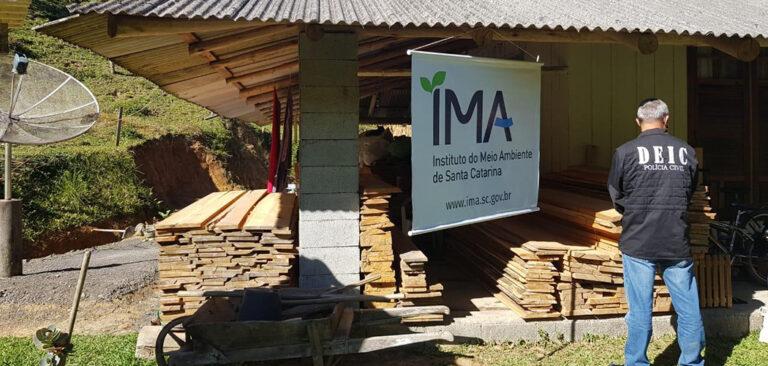 Operação conjunta combate extração Ilegal de Madeira