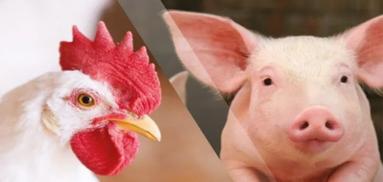 Santa Catarina alcança US$ 2 bilhões com exportações de carnes