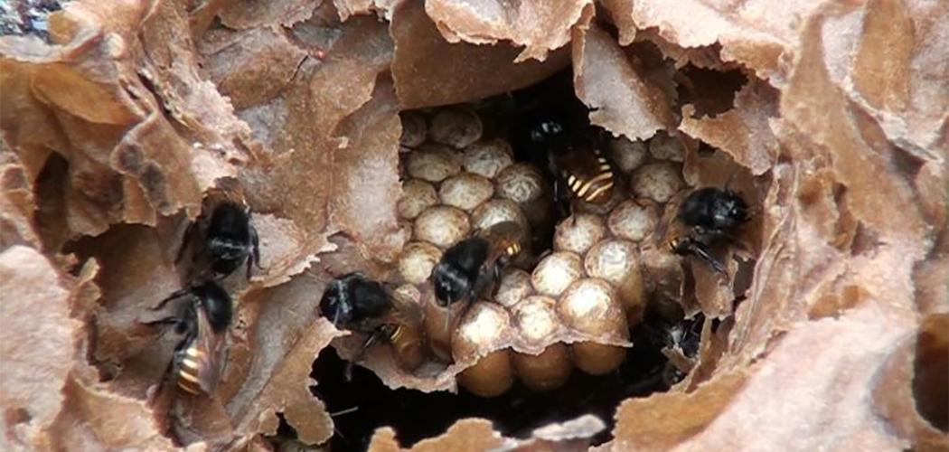 Mel de abelhas sem ferrão é regulamentado em Santa Catarina