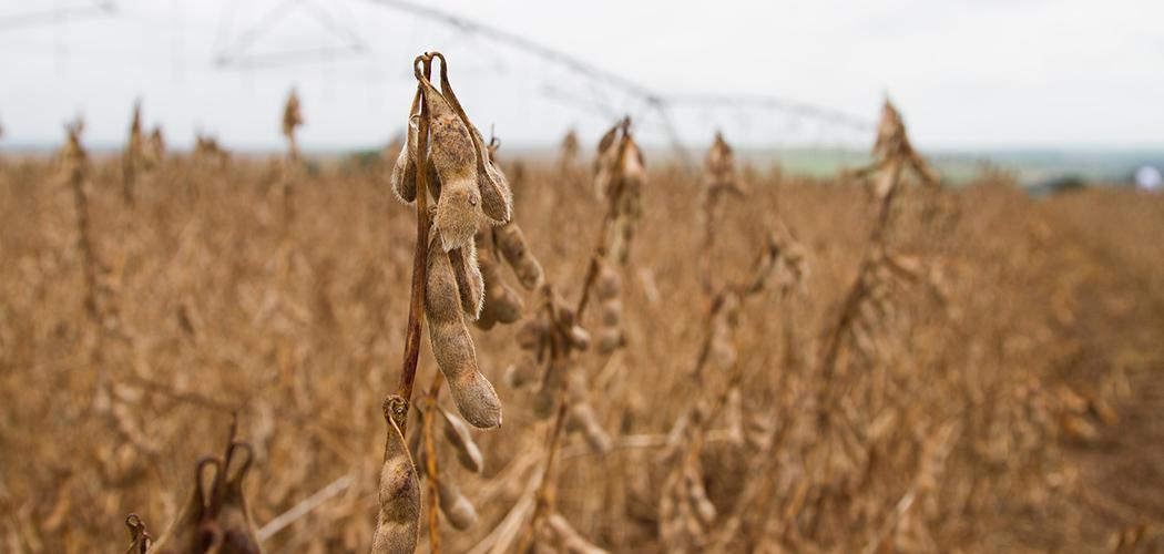 Sistema CNA/SENAR divulga custos da produção agropecuária em 2020