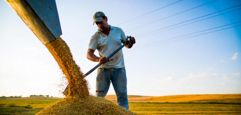 Faculdade CNA abre vagas para graduação a distância em agronegócio