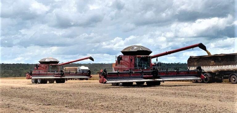 Agrocam iniciou colheita de soja
