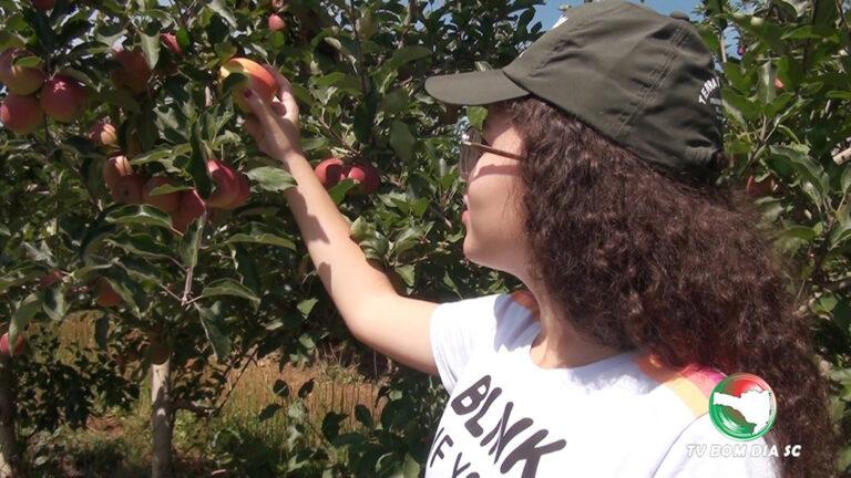 Benefícios de comer uma maçã por dia