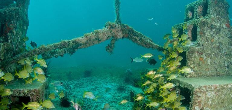 Recifes artificiais devem incentivar Turismo de Mergulho em Santa Catarina