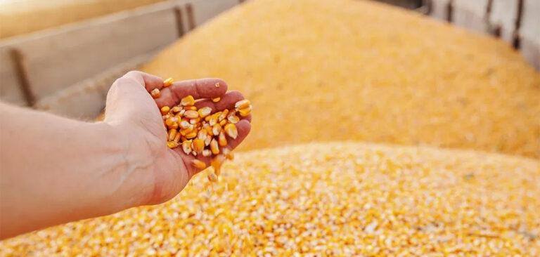 Os desafios para suprir a falta de grãos