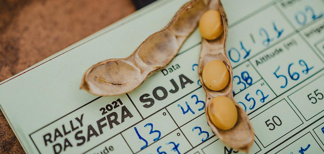 Conforme Rally da Safra 2021, a média de produtividade de soja aumentou em Santa Catarina