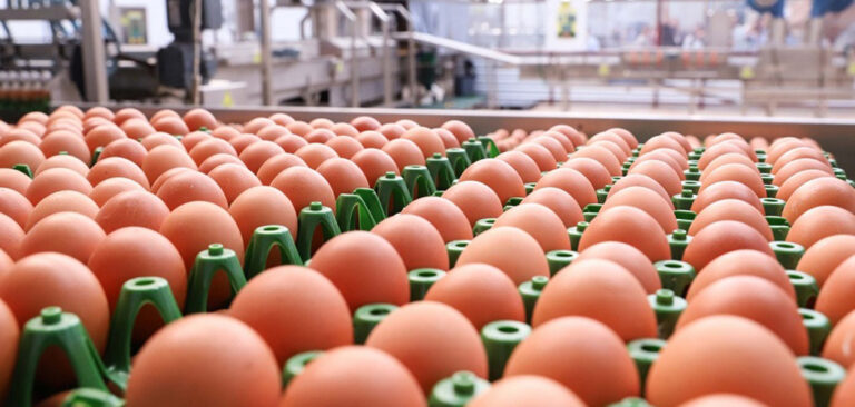 ABPA celebra viabilização de vendas de ovos in natura para Argentina e Chile