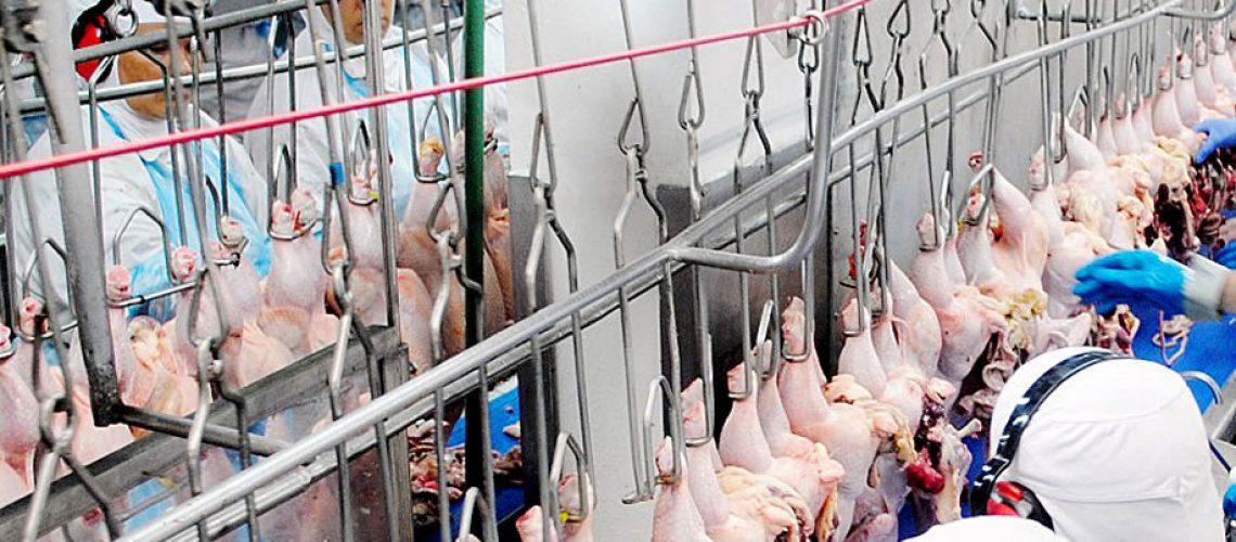 Santa Catarina tem cinco plantas frigoríficas habilitadas a exportar carne de frango para Arábia Saudita/Foto: divulgação Internet