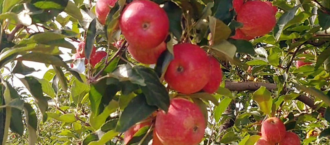 Esse é o período em que você encontrará as frutas mais frescas/Foto: Bom Dia SC