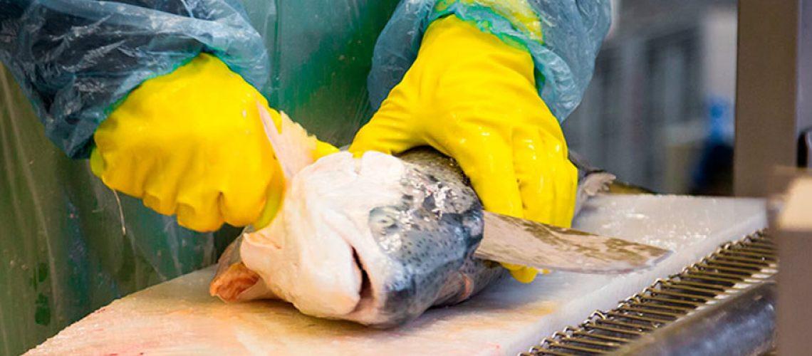 O valor das exportações catarinenses de pescado totalizou US$ 26