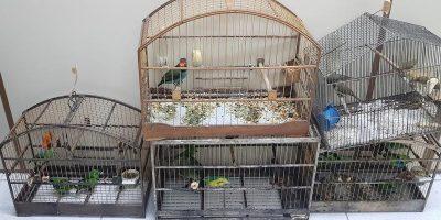 Os animais foram encaminhados para o Centro de Triagem de Animais Silvestres (CETAS)/Foto: Assessoria de Imprensa