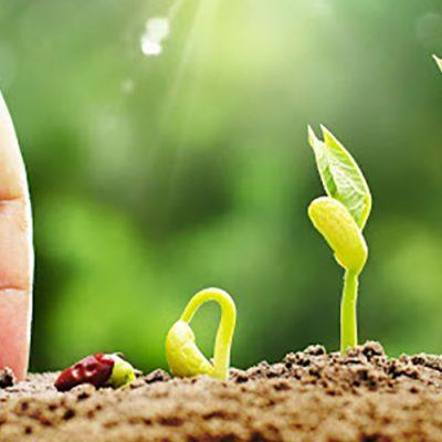 A agricultura brasileira é moderna, sustentável, protetora dos recursos naturais, cumpridora das regras ambientais/Foto: Internet