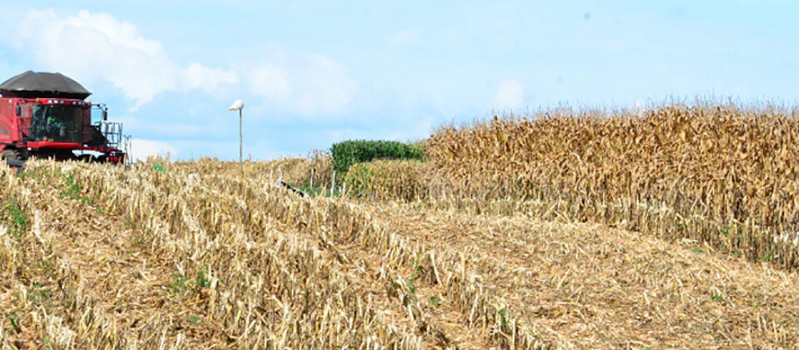 A região oeste é a mais atingida, dentro da perda total estimada em -29% para milho silagem no Estado