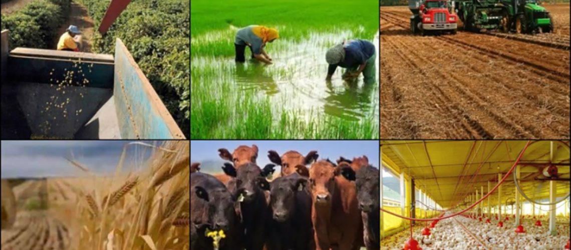 Dentro de cinco anos, o Brasil será o maior produtor de alimentos do mundo, mas para que isso se converta em renda para o produtor serão necessários ajustes/Foto: Internet