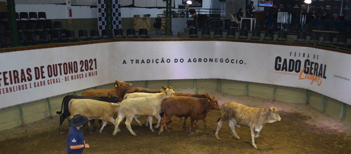 Mais de 450 animais estão inscritos, entre bois, vacas, terneiros e terneiras, além de novilhas