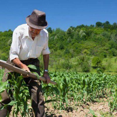 O decreto também altera os percentuais mínimos exigidos para que um empreendimento familiar rural se enquadre nessa categoria/Foto: Internet
