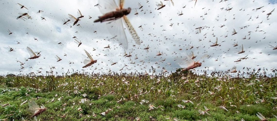 O uso indiscriminado de agrotóxicos nesta fase é considerado desperdício de recursos /Foto: Internet