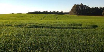 A produção de cereais de inverno ganha cada vez mais força no Sul do Brasil/Foto: Internet