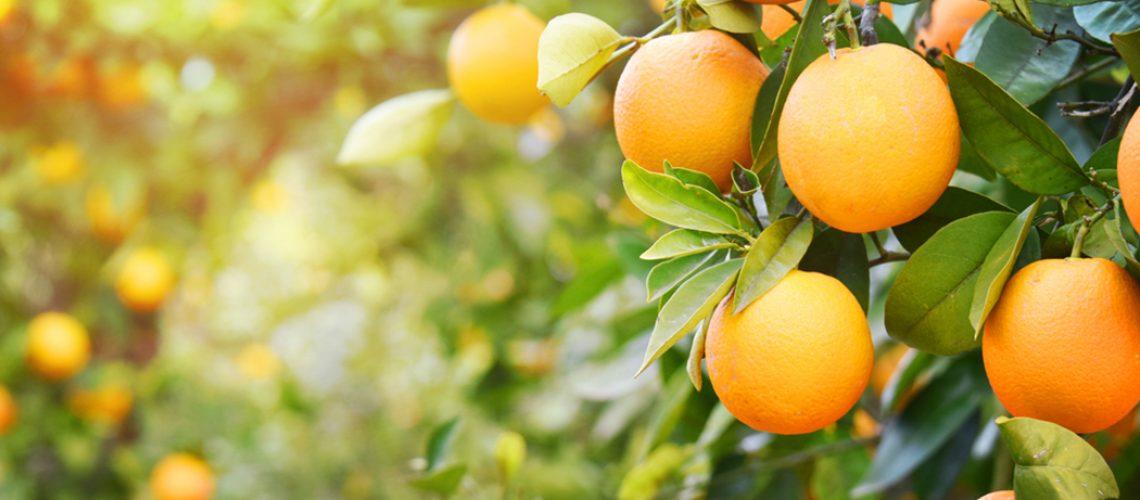 uco de laranja pode ser uma adição valiosa à dieta para ajudar a reduzir a pressão sanguínea/Foto: Internet