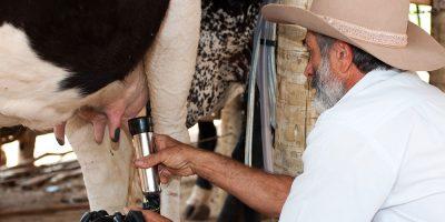 O Conseleite visa tratar de soluções conjuntas para problemas do setor lácteo/Foto: Internet