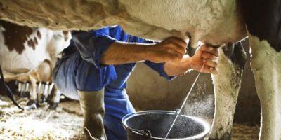 Produção de leite precisa ser mais competitiva no Estado/Foto: Internet