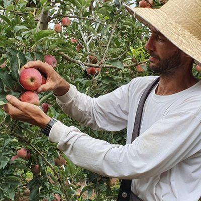 Segundo o produtor e integrante do núcleo de Fruticultura da Associação Empresarial de Fraiburgo (ACIAF), Guilherme Francescatto, os resultados vem surpreendendo