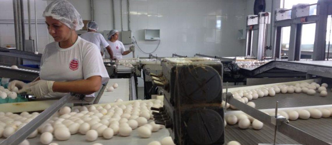 As vendas internacionais de ovos seguem impulsionadas pela retomada dos níveis de consumo/Foto: Internet
