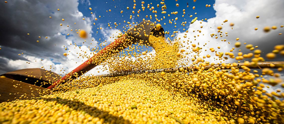Safra de grãos deve representar 51,4% na participação do VBP, com destaque para a soja