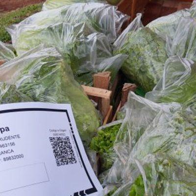 Famílias da Terra Indígena Xapecó, começaram a produzir hortaliças para consumo próprio e agora até vendem o excedente