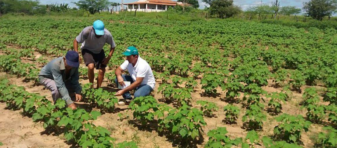 O Projeto estabelece medidas de socorro financeiro aos agricultores familiares/Foto: Internet