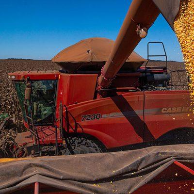 Em 15 anos, área plantada foi reduzida no Estado e alcançou 330 mil hectares de lavouras no ano passado