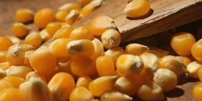 O milho está supervalorizado e não há indicação de que essas cotações possam recuar/Foto: Internet