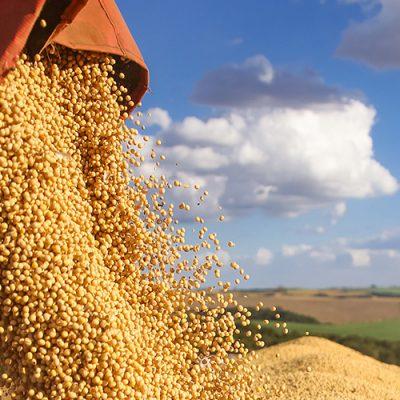 Os produtores que não são sócios também poderão comercializar a oleaginosa e receber a gratificação