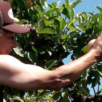 Fraiburgo, Terra da Maçã, abre oficialmente a colheita 2020/2021