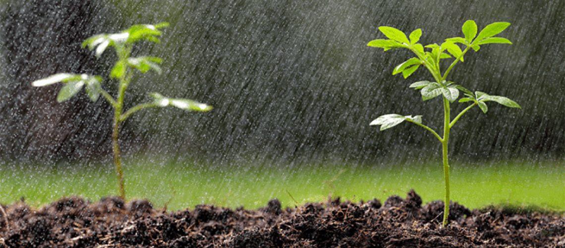 O verão inicia em 21 de dezembro e traz com ele a tão esperada chuva para Santa Catarina/Foto: Internet