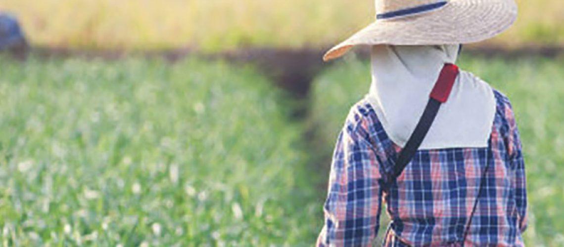 A prorrogação do vencimento neste ano representa um ato de sensibilidade com a situação vivida pelos produtores em todo o Estado/Foto: Divulgação Internet