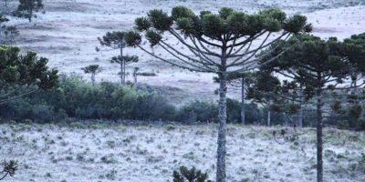 No final de semana as temperaturas devem permanecer baixas e com a possibilidade de formação de geada ampla/Foto: Internet