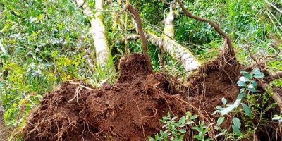 Com a aprovação da norma, é possível remover ou utilizar este material lenhoso de menor custo, oriundo das próprias árvores derrubadas ou danificadas por ação do temporal