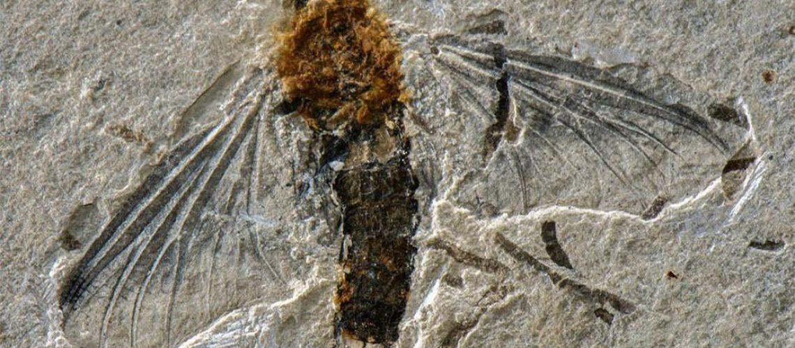 A rocha onde o fóssil foi encontrado é datada do Cretáceo Inferior, entre 113 e 125 milhões de anos atrás/Foto: Frederico Falcão Salles/Universidade Federal de Viçosa