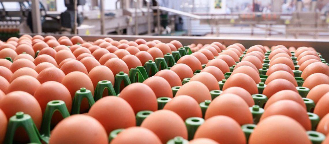 As exportações brasileiras de ovos têm obtido bons resultados em 2021/Foto: Internet