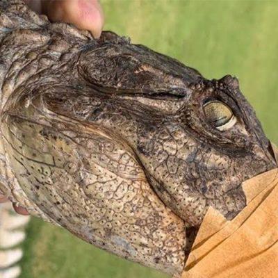 Após 38 dias de tratamento, o animal, que ganhou o apelido de Cuca, foi devolvido à natureza